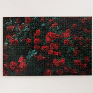 Bed of Red Roses – 1000 piece jigsaw puzzle