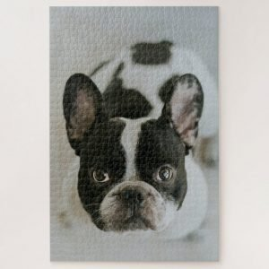 Black and White Frenchie Dog – 1000 piece jigsaw puzzle
