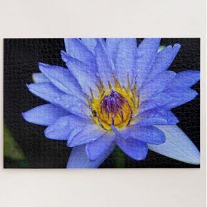 Blue and Yellow Waterlily Flower – 1000 piece jigsaw puzzle