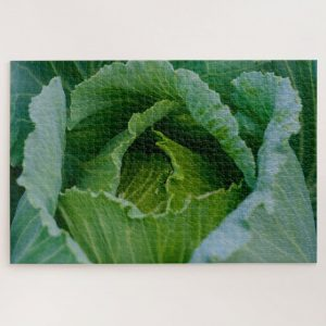 Cabbage Closeup – 1000 piece jigsaw puzzle