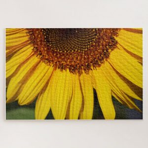 Closeup Sunflower – 1000 piece jigsaw puzzle