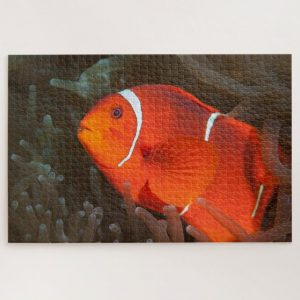 Clownfish in Anemone – 1000 piece jigsaw puzzle