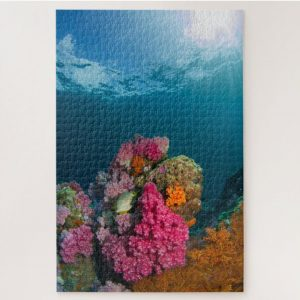 Colorful Coral in Thailand – 1000 piece jigsaw puzzle