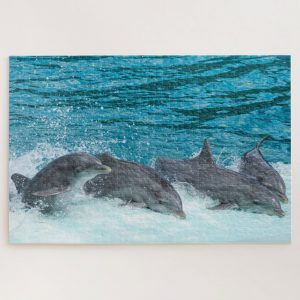 Four Dolphins – 1000 piece jigsaw puzzle