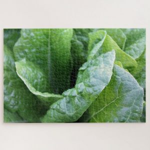 Green Lettuce Closeup – 1000 piece jigsaw puzzle