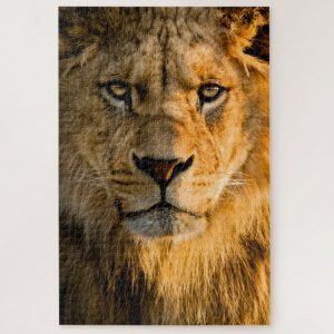 Lion Closeup – 1000 piece jigsaw puzzle