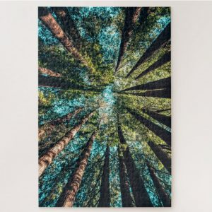 Looking up to Forest Canopy – 1000 piece jigsaw puzzle