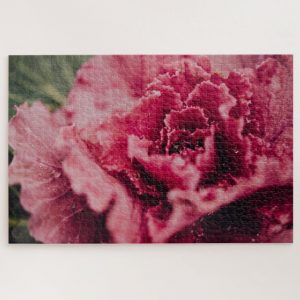 Red Flower Closeup – 1000 piece jigsaw puzzle