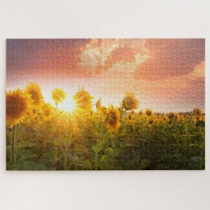 Sunset and Sunflower Field – 1000 piece jigsaw puzzle