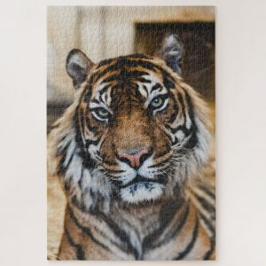 Tiger Closeup – 1000 piece jigsaw puzzle