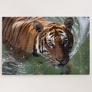 Tiger in Water – 1000 piece jigsaw puzzle