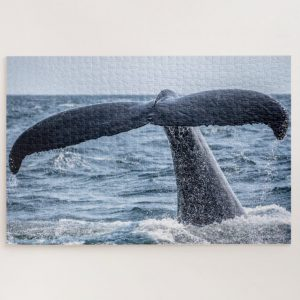 Whale Tail – 1000 piece jigsaw puzzle